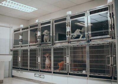 Hospital Canino